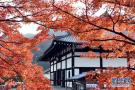 日本京都红叶季