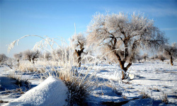 新疆:塔克拉玛干沙漠出现雾凇奇观
