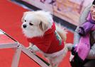 萌犬运动会