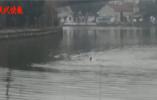 天寒地冻女子水中呼救 2小伙毫不犹豫跳入河中
