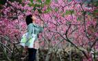 三月的温州,带你看遍十里桃花!这份最全赏花攻略请收下