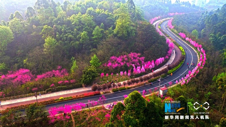 春到乐山城 花漫绿心路