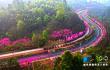 """蜿蜒在山间的多彩""""玉带"""" 乐山花漫绿心路"""