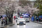 南京鸡鸣寺路樱花雨中绽放