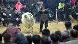 农民斗羊斗鸡大赛 吸引千名观众场面震撼
