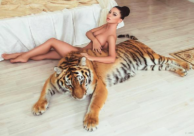 最新老虎都蟒蛇