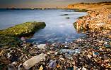 调查显示英国海域废弃塑料袋数量下降