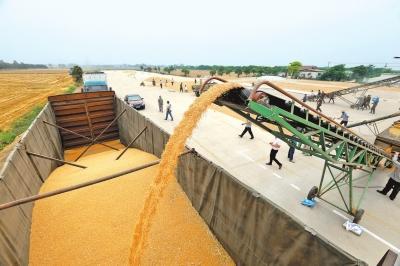 今年新增50万亩优质大豆 大豆也能鼓起农民腰包