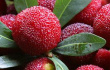 每天吃水果什么时间吃最好?
