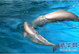 國內首起非法買賣江豚的刑事案宣判 二人非法買賣江豚獲刑