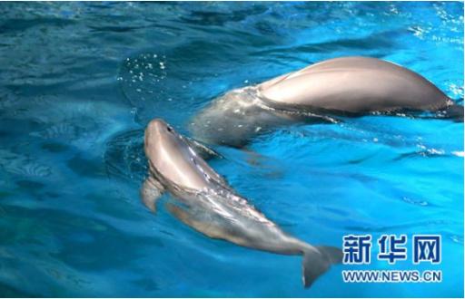 國內首起非法買賣江豚的刑事案宣判 二人獲刑