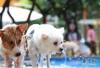 狗咬了人是不是就要扑杀、再咬咋办:苏州养犬管理条例听证