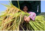 农业农村部谈中国农民丰收节:坚持节俭热烈办节日