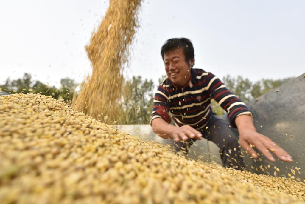聊城:家庭农场托管大豆收获忙