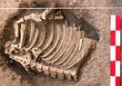 3000年前人类遗骸
