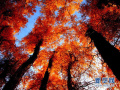 周末去汝州赏红叶 盘点最佳观赏红叶的地方