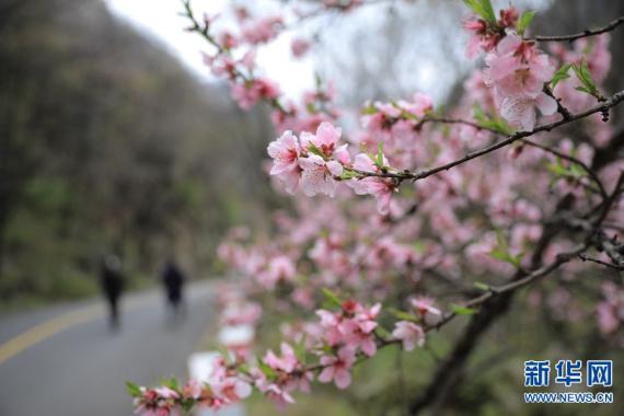 尧山:三月飞雪至 浪漫春花开