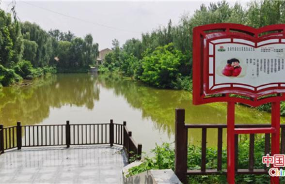 【决胜2020 乡村振兴看河南】小辣椒大产业的柘城探索