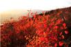 國搜盤點:京城那些最美的楓紅黃葉哪里找
