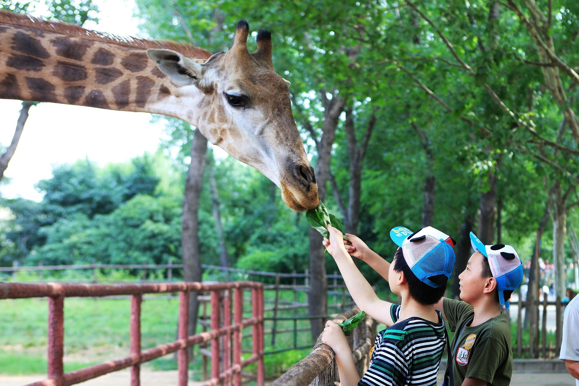 郑州雁鸣湖野生动物园有限责任公司最新招聘信息_... -58企业名录