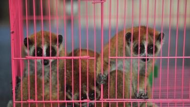 中国最大系列贩卖野生动物案一审宣判