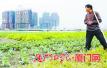 廈門市約12萬畝耕地 流轉到農業經營主體