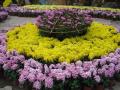 沈阳中山公园菊花展9月25日开幕 市民可免费参观