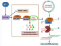 中国农业科学院植保所揭示病毒抑制植物RNA沉默新机制