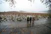 一夜掉进冰窟窿!冻骨的湿冷来了,杭州最低温零下1℃