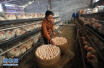 11月菏泽主要农副产品:鸡蛋价格持续上涨