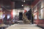 黑龙江省博物馆上演骏犬啸天文物展 照片带你涨知识