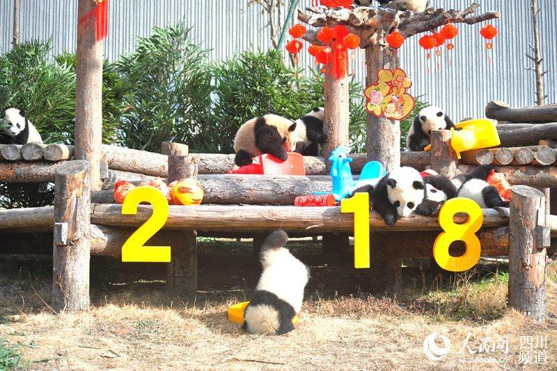 新生熊猫团子送祝福