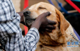 养狗会导致流产或胎儿畸形?一些人对狗的误解很深