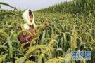 辽宁已有超过六成的国有农场完成企业化改造