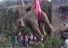 大象被起重机吊起
