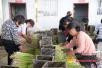 商丘示范区:特色种植带动群众致富