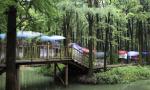 """兴化水上森林旅游越来越有味 文旅融合不负""""诗和远方"""""""