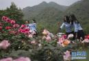 地震重灾区成玫瑰谷