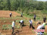 河南淇县交警铲除非法种植罂粟560多株