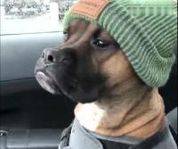 看这只狗子一脸严肃的样子