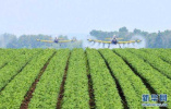 山东加快构建政策体系 培育新型农业经营主体