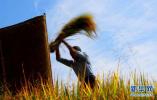 农历秋分将成中国农民丰收节!中国节日单了解一下