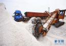 河北唐山:海盐丰收货满仓