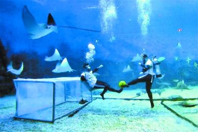 潜水员开踢水下足球 鱼儿一旁观战好热闹