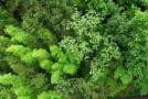 """杭州园林部门发动市民吃知了护绿,延请""""捕蝉达人""""示范"""