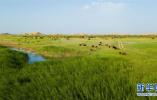 绿富同兴画卷在沙海中铺展——库布其沙漠生态治理纪实