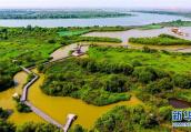 """黄河湿地保护区再现""""万鸟临河""""盛况 但盗猎者也来了"""