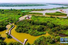 """黃河濕地保護區再現""""萬鳥臨河""""盛況 但盜獵者也來了"""