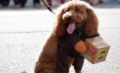 健康提醒:被猫狗抓舔后 也可能得狂犬病