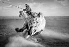 图片故事:草原上的游牧迁徙